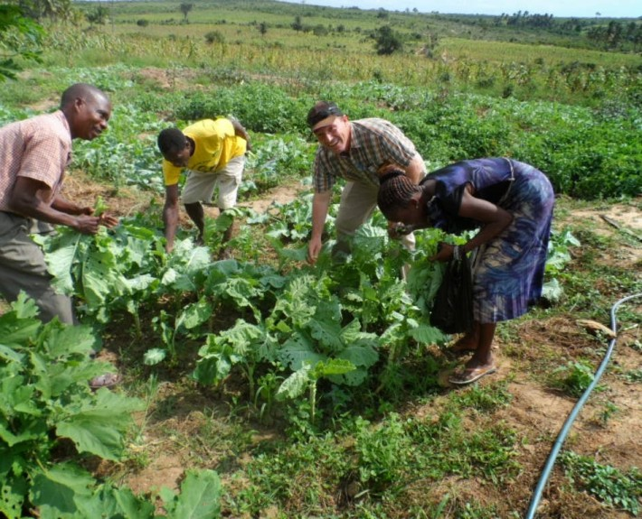 Tsuma and his village group picking a bountiful harvest in Gona, Kenya.