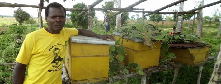 Tsuma posing with his box beehives.